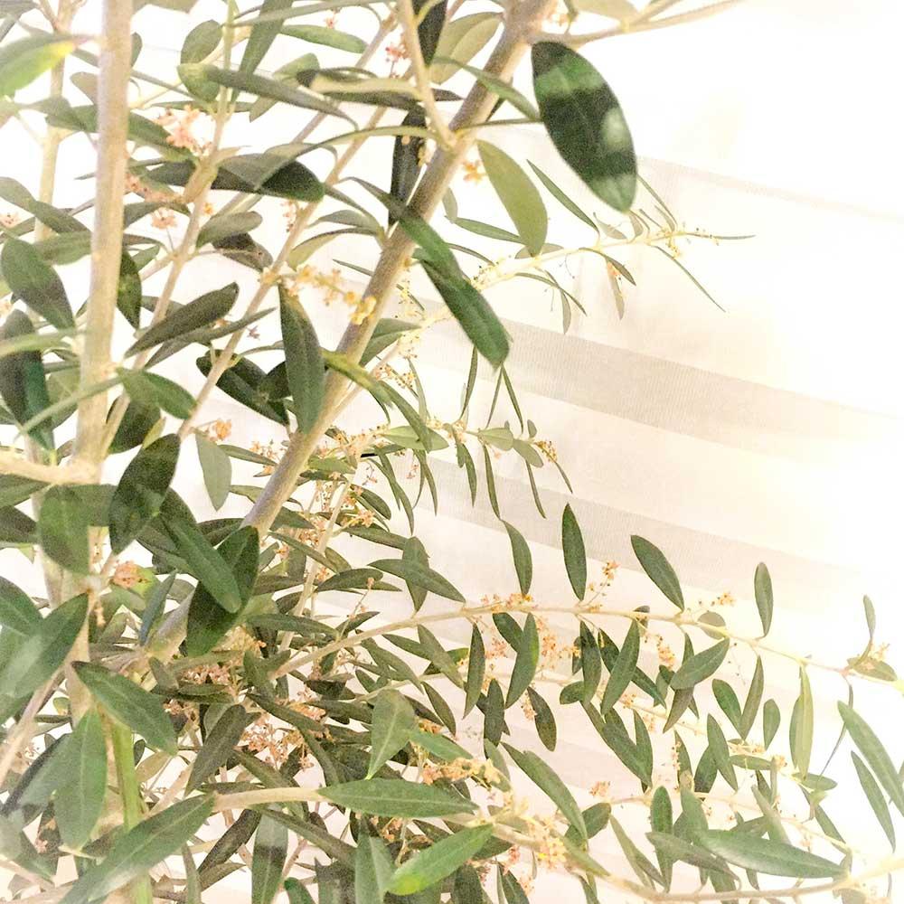 我が家の新しい植物の仲間たち